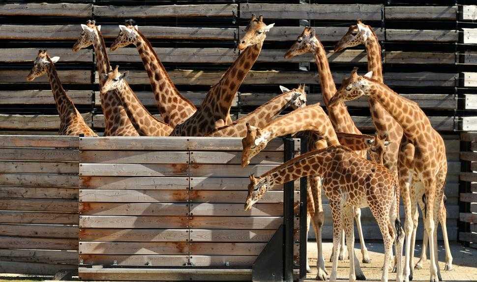 Zoo di Parigi