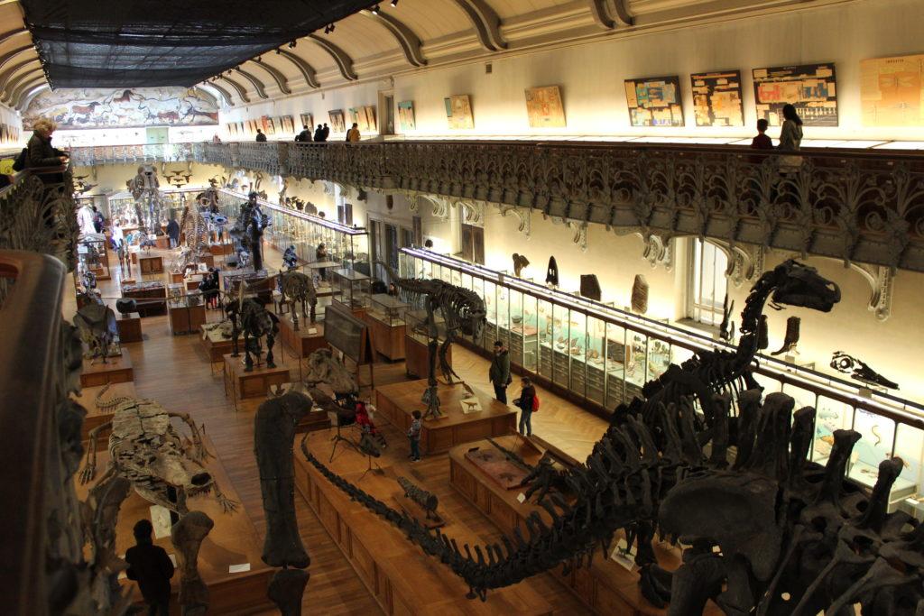 galleria dei fossili dei dinosauri