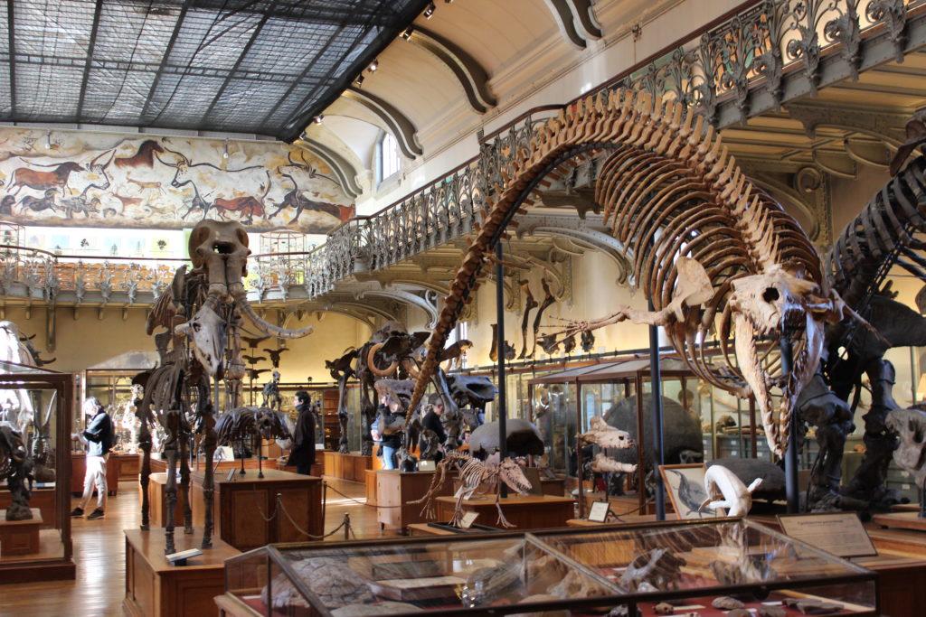 Museo_paleontologico-galleria-dei-fossili
