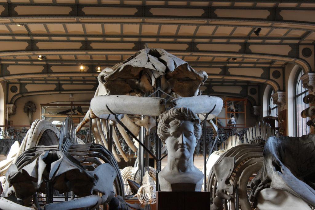 Museo Paleontologico -particolare