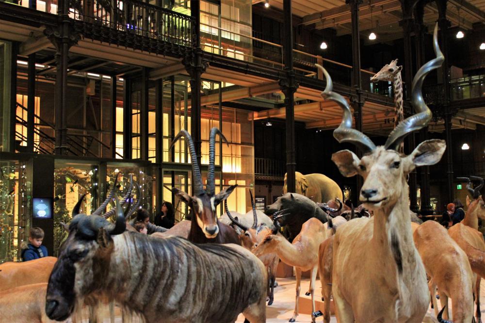 Grande Galerie de l'Evolution primo piano