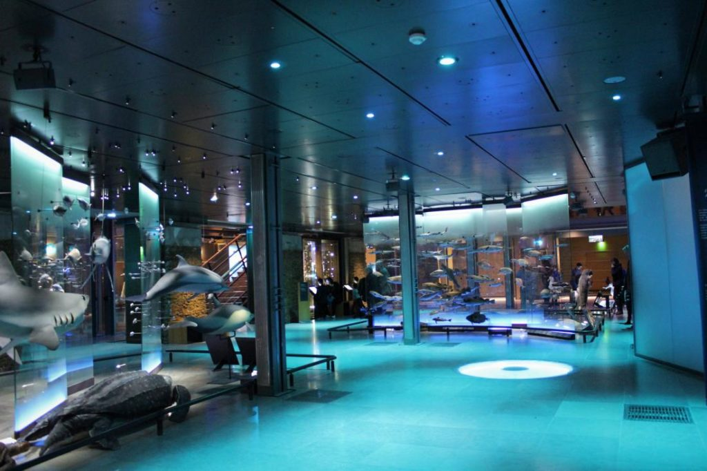 Grande Galerie de l'Evolution piano terra