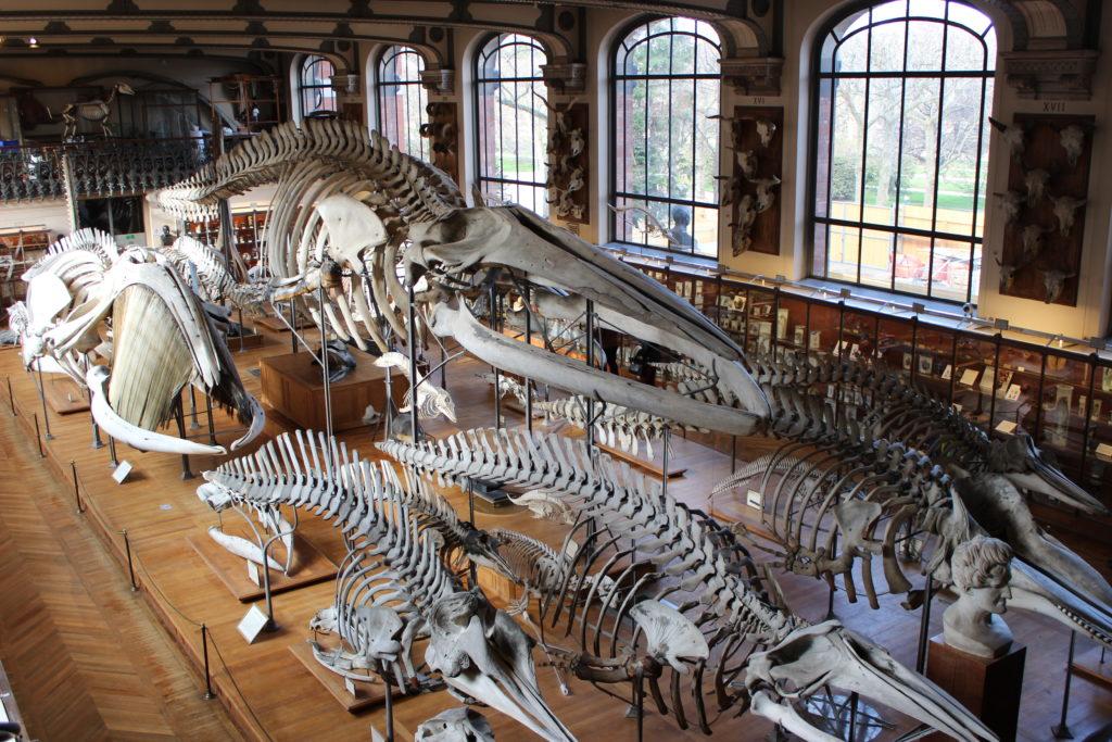 museo paleontologico_galleria_animale