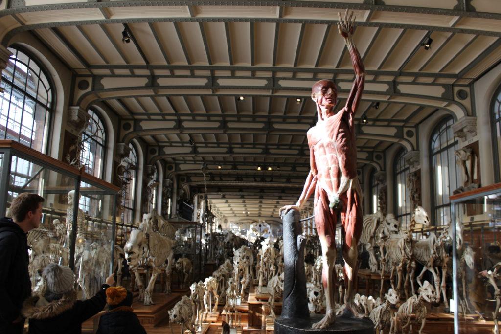 Museo-paleontologico-ingresso