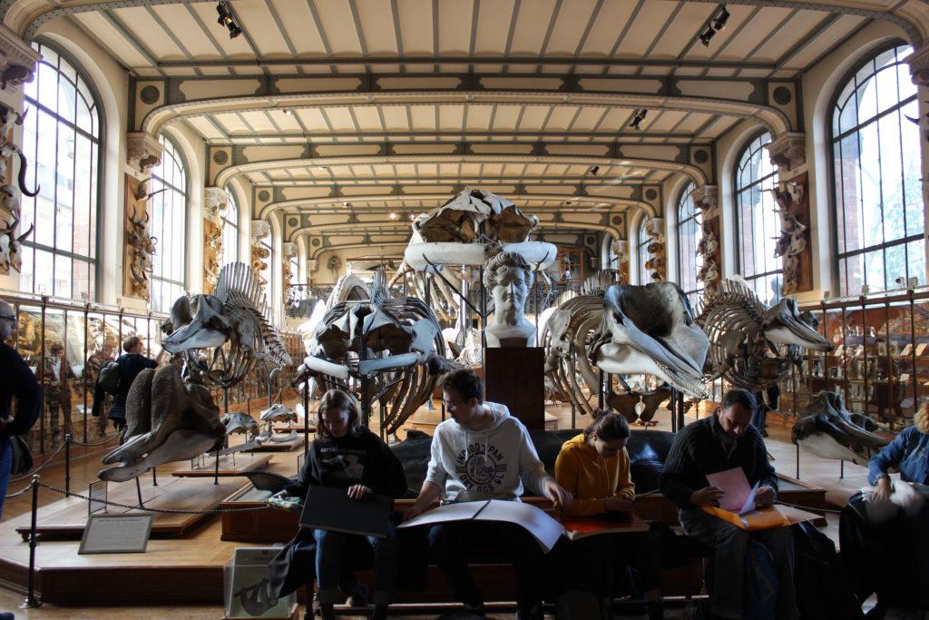 Lezioni di disegno al museo