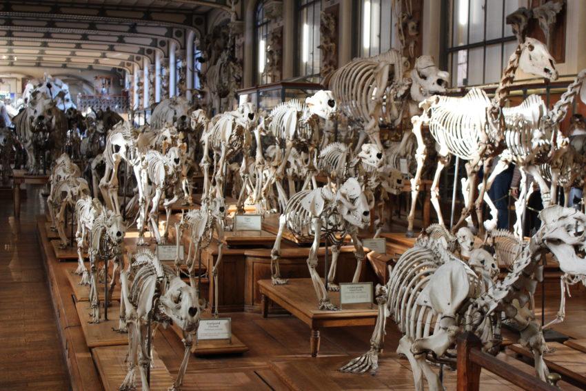 Il Museo Paleontologico di Parigi